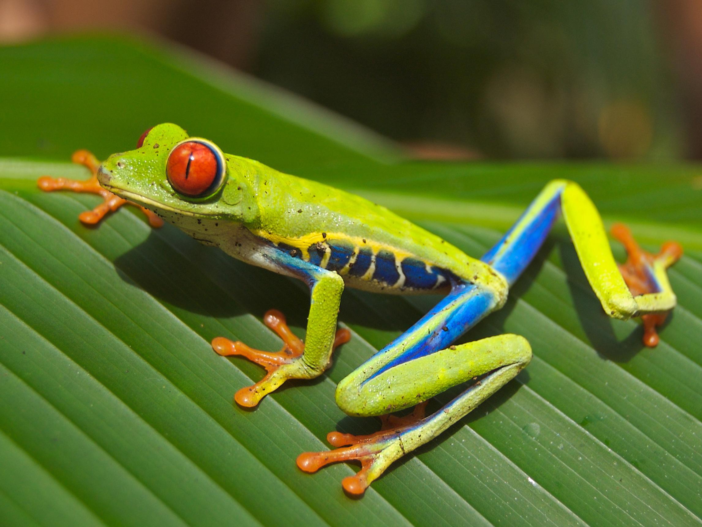 Costa Rica acogerá congreso sobre inteligencia turística sostenible
