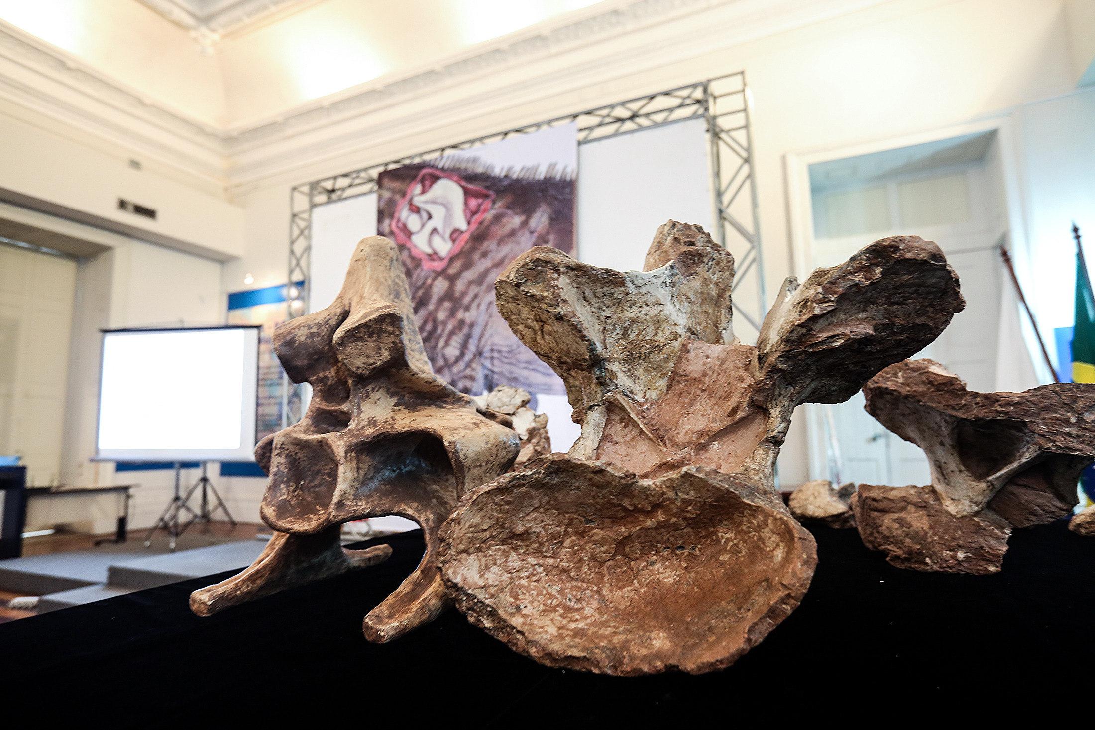 Investigadores anuncian descubrimiento del mayor dinosaurio de Brasil