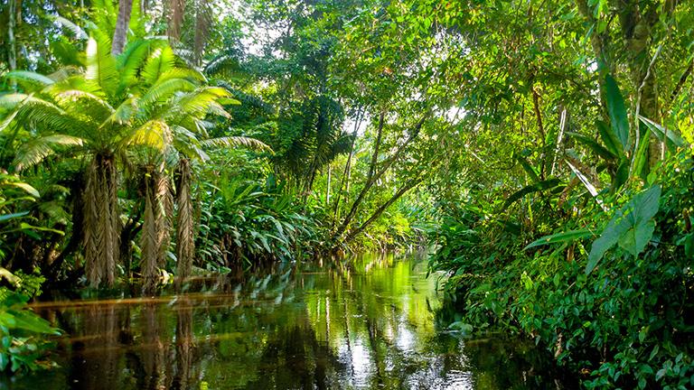 Conservación de la Amazonía y sus efectos del cambio climático
