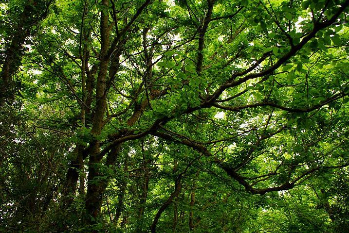 Pueblos indígenas garantizan la lucha contra la deforestación y cambio climático