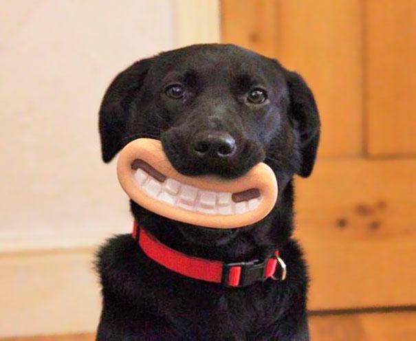 Los perros especie inteligente con memoria episódica