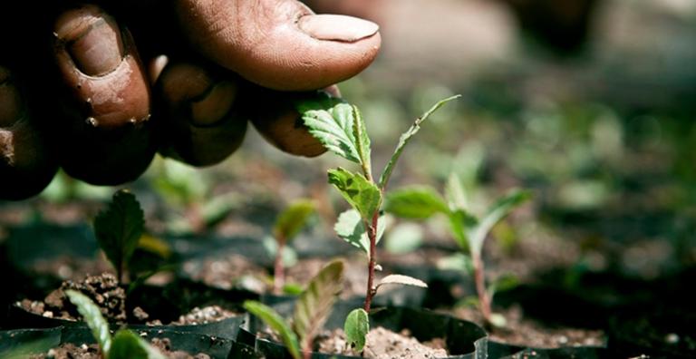 Reforestación: Sinónimo de culpa pero no de soluciones