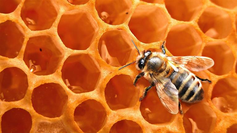 Los beneficios de la miel de abeja