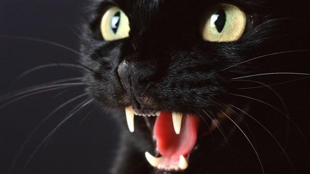 El Diablo usa una camiseta con un gato negro sobre una cruz rusa