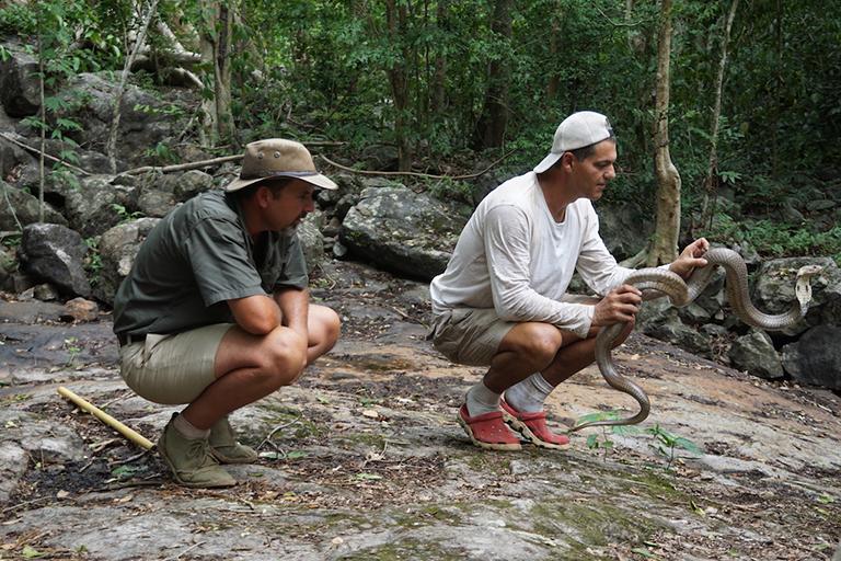 WILD FRANK: El especialista en reptiles se ubicará ante los ojos de un león